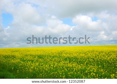 flower meadow over cloudy sky