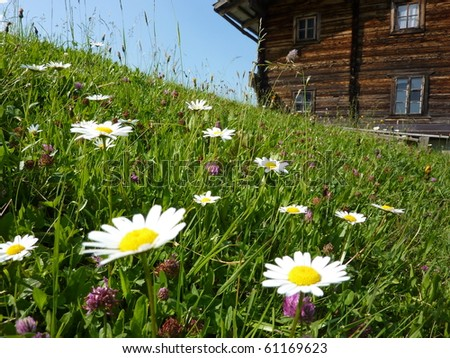 Flower meadow with a barn - stock photo