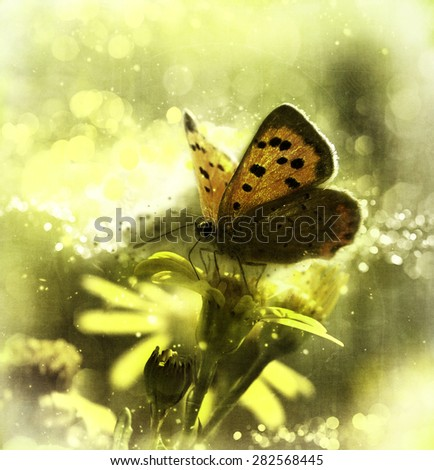 Flower meadow with butterfly - stock photo