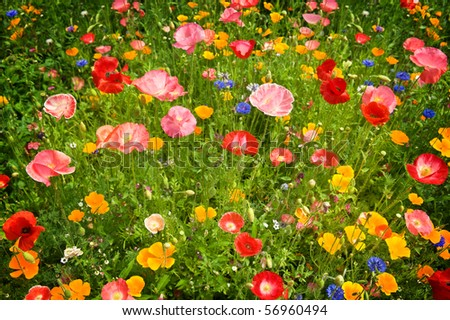 Flower meadow with different sorts of flowers - stock photo