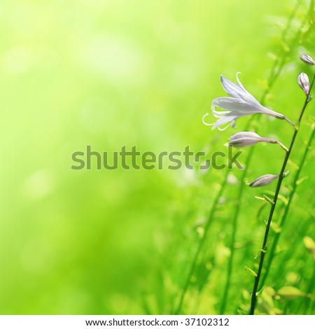 flower of bells on green background - stock photo