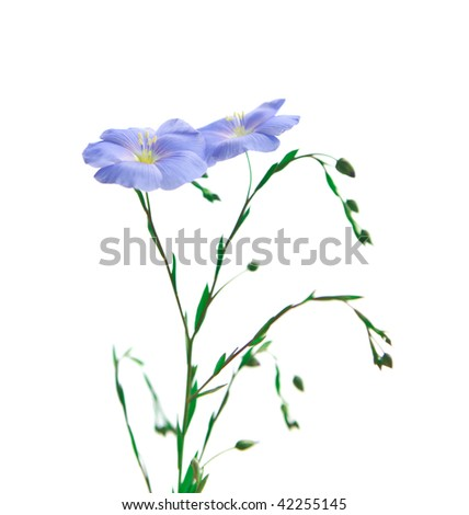 Flower of flax - stock photo