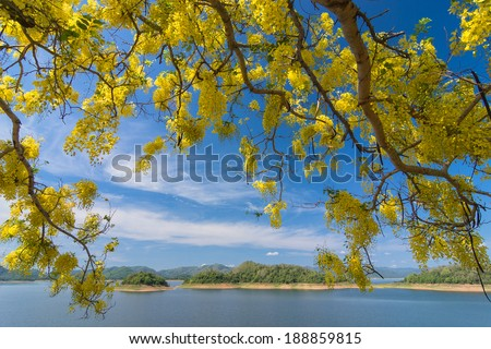 Flower of Golden Shower or Cassia Fistula in clear blue sky. nat - stock photo