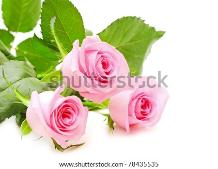 flower of pink roses on white background - stock photo