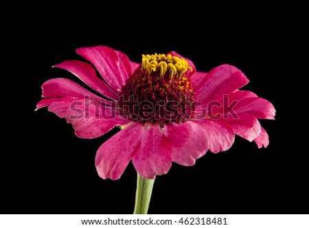 flower on a black background