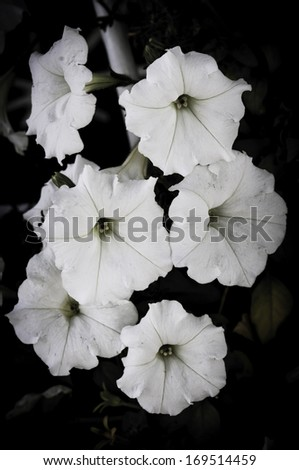flower on black flower design - stock photo