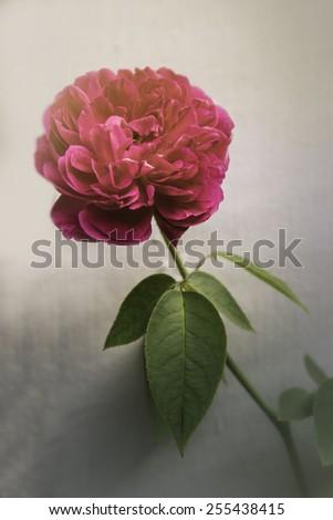 flower on black flower design - stock photo