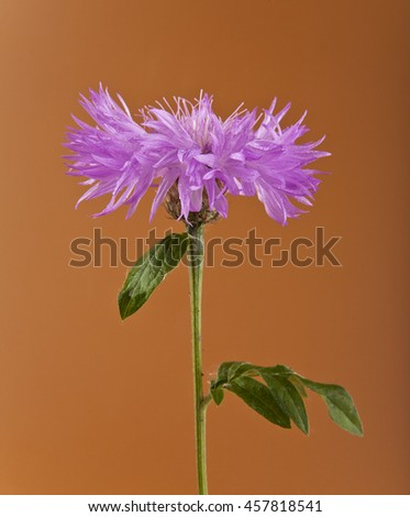 flower on brown background