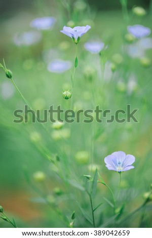 Flower on garden with shallow DOF - stock photo