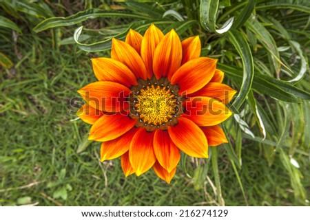 Flower on mount Bromo - stock photo