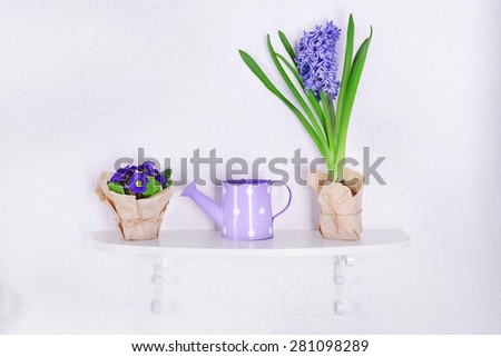 Flower on shelf on white wall background