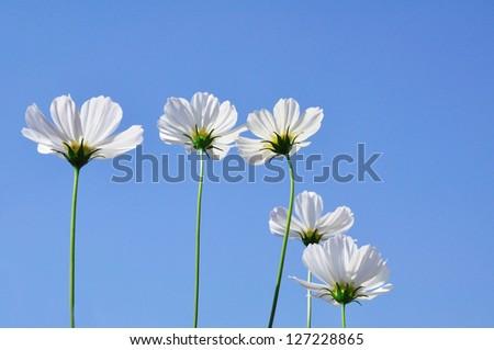 Flower on sky - stock photo