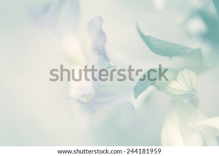 flower on soft sparkle pastel color - stock photo