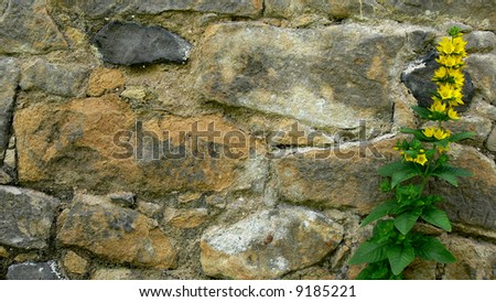 Flower on stone wall background - stock photo