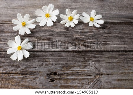 flower on wooden background - stock photo
