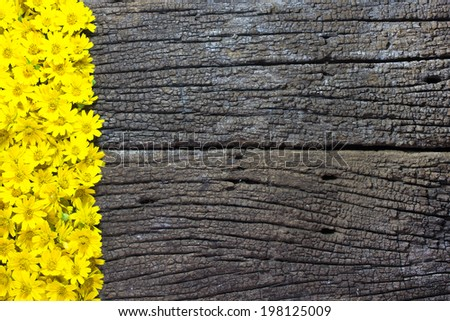 Flower on Wooden Background, with the space for the text - stock photo
