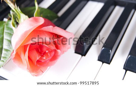 Flower one red rose on keyboard piano - stock photo