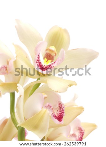 Flower orchid   - stock photo