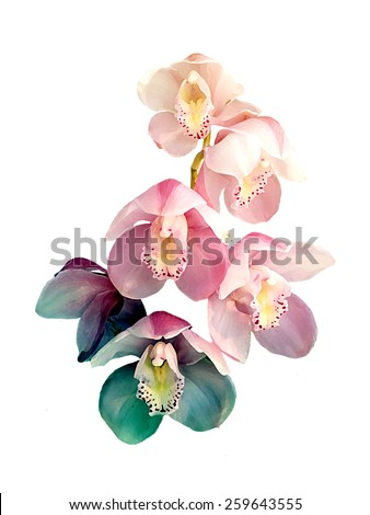 Flower,orchid flower print in soft colors