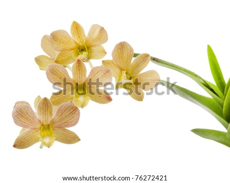 Flower, orchid isolated on white background - stock photo