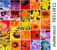 Flower panel. A collage - stock photo