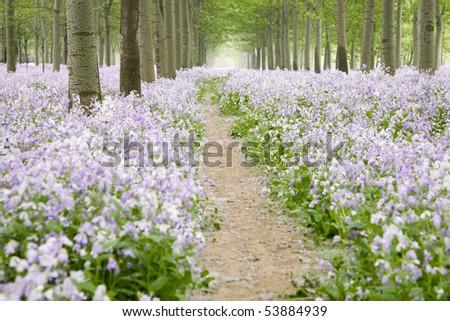 flower path - stock photo