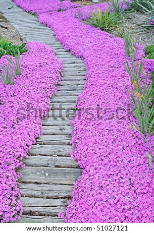 flower pathway - stock photo