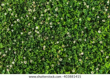 Flower pattern in garden background - stock photo