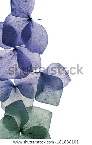 flower petal isolated close-up - stock photo