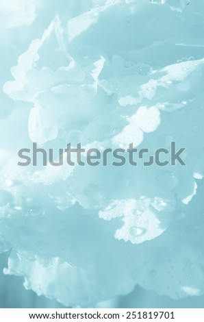 flower petals abstract background - stock photo