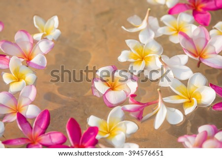 flower petals in a bowl at a spa, shallow DOF - stock photo