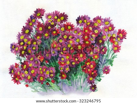 Flower pink red chrysanthemum bouquet. Watercolor painting