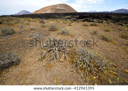 flower  plant  bush timanfaya  in los volcanes volcanic rock stone sky  hill and summer  lanzarote spain - stock photo