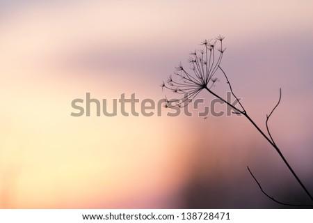 flower plant on summer morning sunrise - stock photo