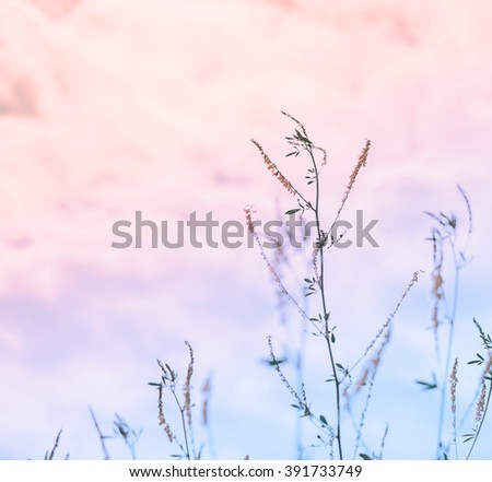 Flower plant on the sky background in twilight