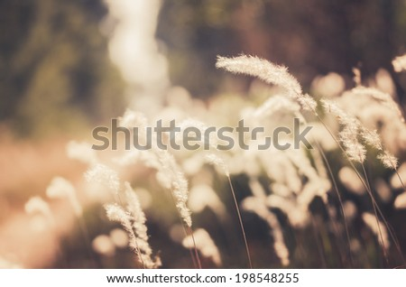 Flower plant weed in the nature or in the garden vintage - stock photo