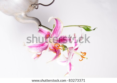 Flower, Pot 2 - stock photo