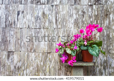Flower pot on old wooden wall background leaving space for text