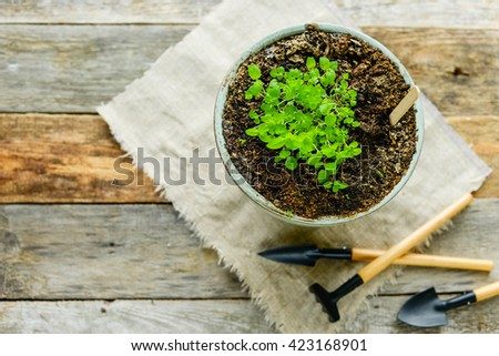 Flower pot with a young green shoot on a wooden table.  Sprouting seeds. Empty space. Background. Earth Day. Spring. Summer. New life - stock photo
