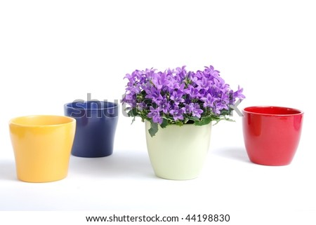 flower pots and flower campanula - stock photo