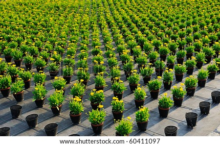flower pots in a plant nursery - stock photo