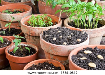 flower pots with plants and seeds/planting/gardening - stock photo