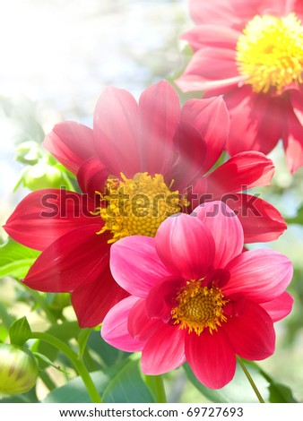 Flower  red  petals - stock photo