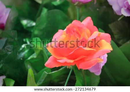 flower, related flower.  - stock photo