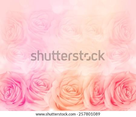 flower rose background - stock photo