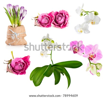 Flower set. Pink roses, orchids and crocus  on white background - stock photo