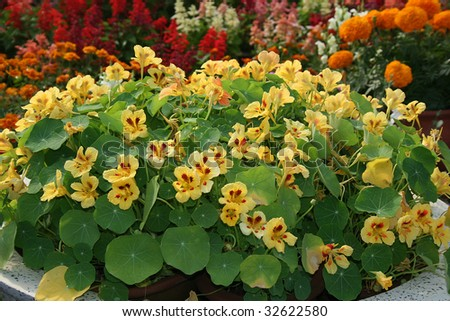 Flower Show at Lal Bagh in Bangalore, Karnataka, India, Asia - stock photo