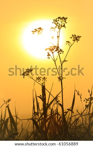 Flower silhouette at sunrise and morning mist - stock photo