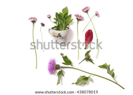 Flower small cup with leaves inside and purple wild flowers on an isolated background. Dried rose petal. Concept. Summer atmosphere. Tea party with the flora. Network of nature - stock photo