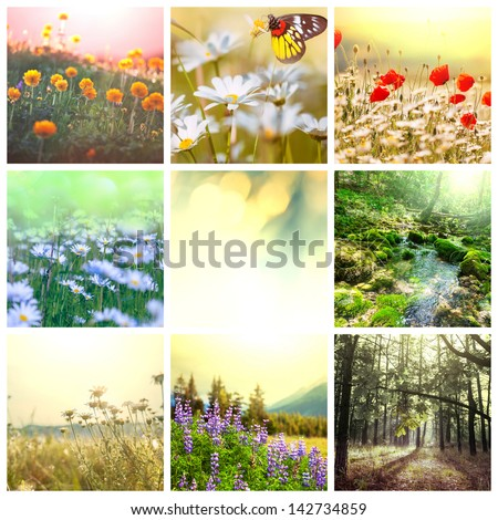 Flower spring background - stock photo